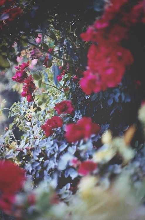{♥} floral