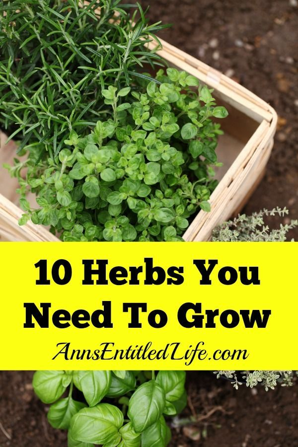 10 Herbs You Need To Grow - Fresh herbs have a long history of medicinal and cul...