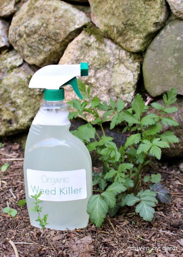 3-Ingredient Organic Weed Spray (That Works!)