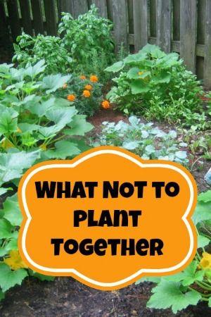 Companion Planting