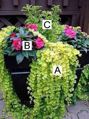 Container Flower Gardening Ideas. Lots of different flower combos