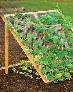DIY: Cucumber Trellis