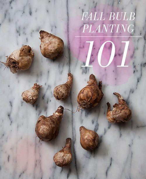 Design*Sponge   Bulb Planting 101 (everything you need to know about getting rea...