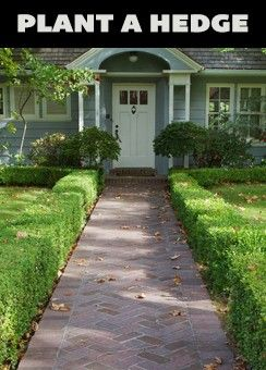 Hedges add year-round beauty to your landscaping and they can provide natural pr...
