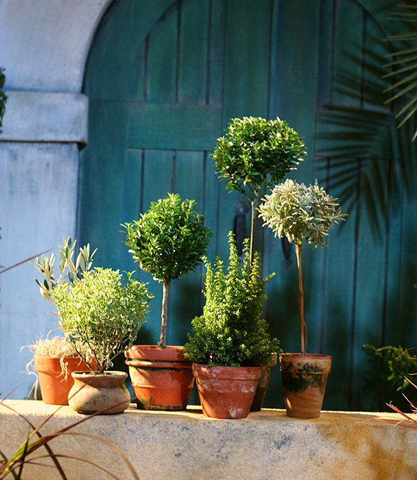 How to Start an Herb Garden: For Cooking & More