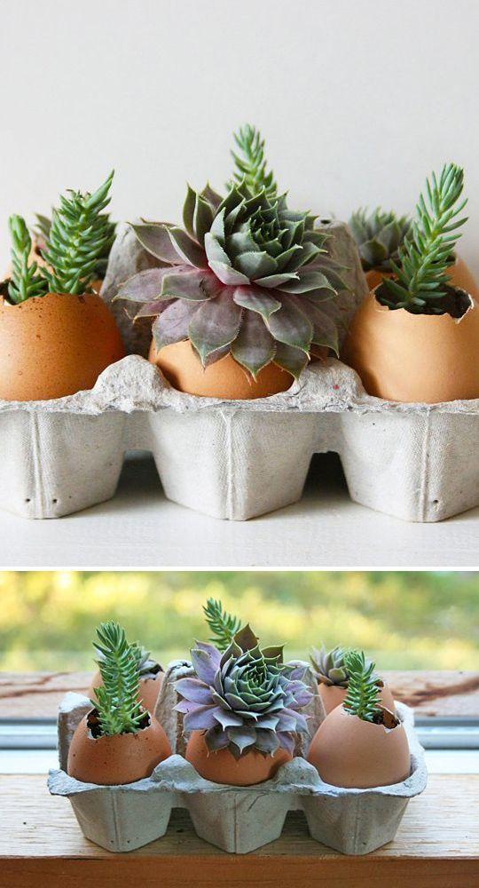 Indoor Gardening Projects