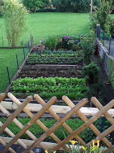 Somebody else's vegetable garden