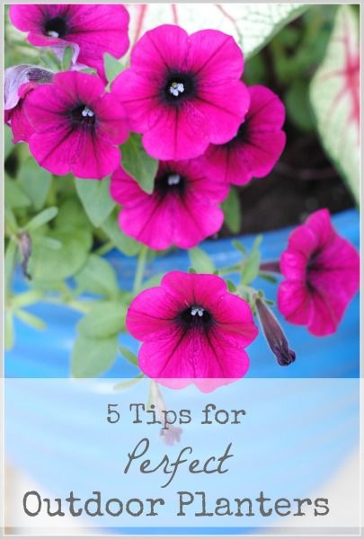 What to Plant in a Planter