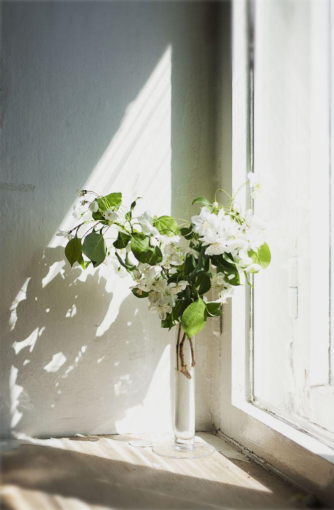 freshly cut flowers in window light