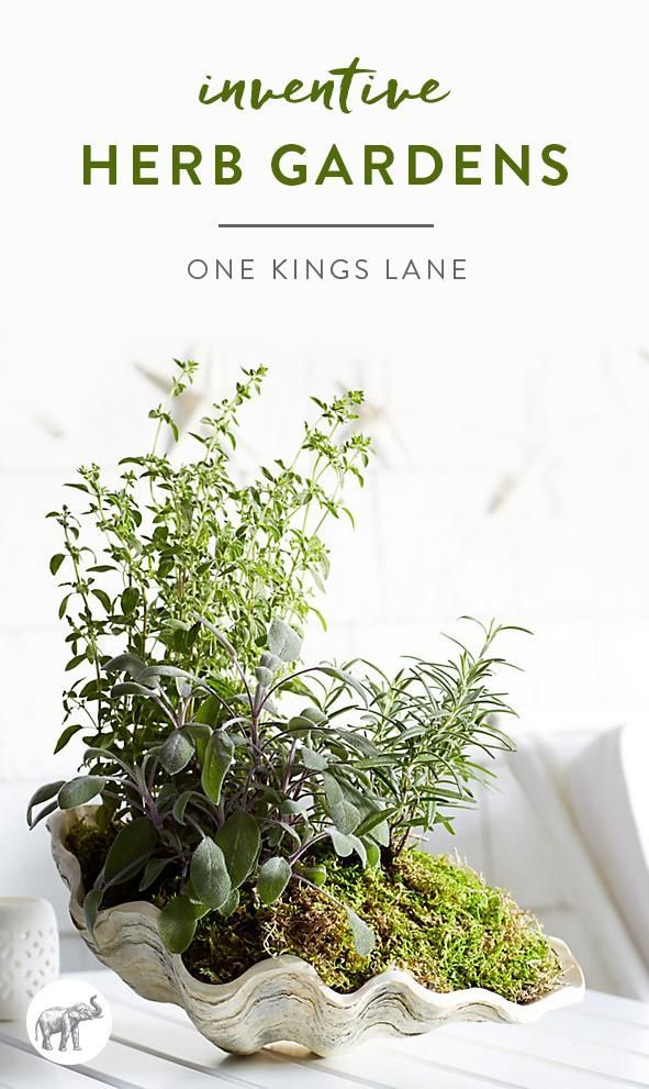 3 Inventive Takes on the Classic Herb Garden