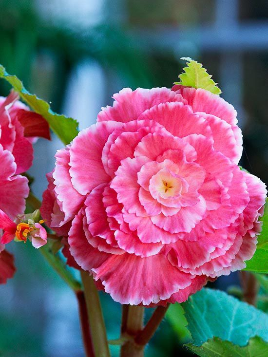 Summer Flowers and Bulbs