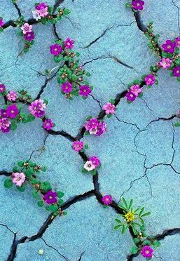 flowers in cracks.......................Search here for something amazing: visit...