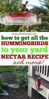 Get ALL the hummingbirds to your yard!
