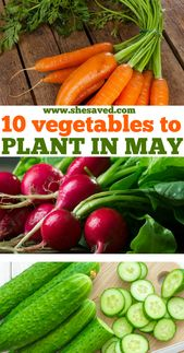 Best Vegetables to Plant May