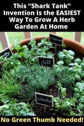 Best Way To Grow A Herb Garden
