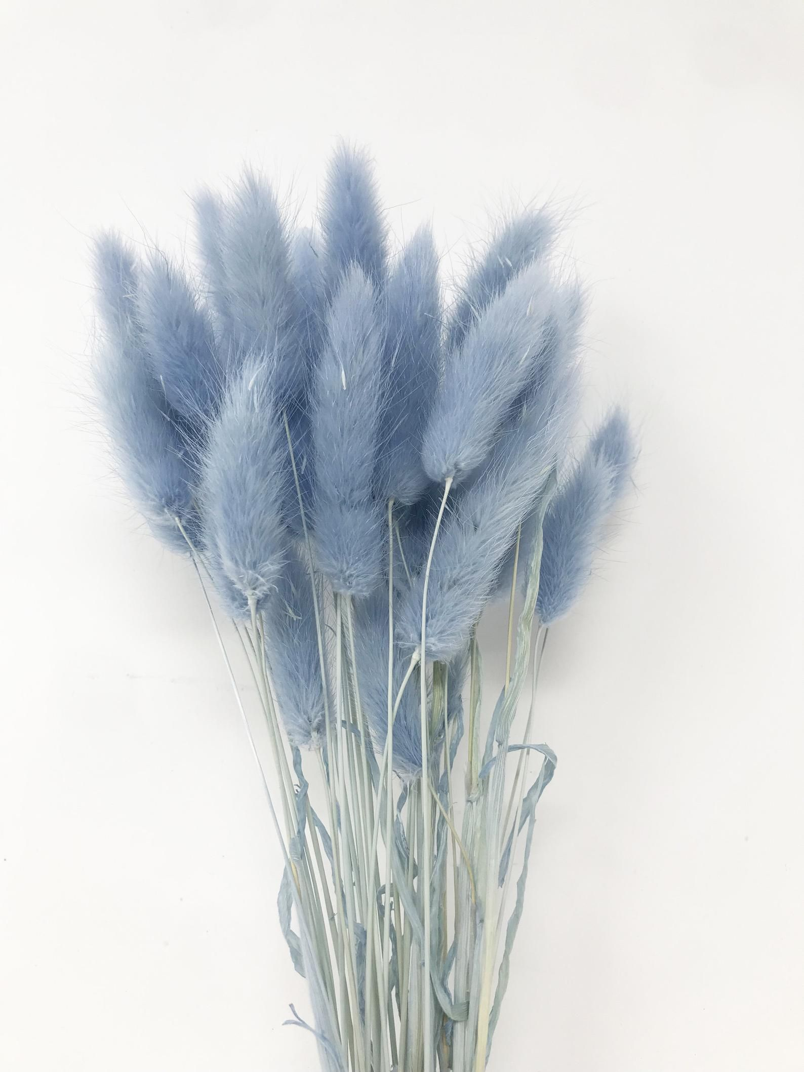 15g Lagurus in Light Blue, Dried flowers, Floral arrangements, Blue flowers, stem flowers, Wedding decor, Home decor, Wedding flowers
