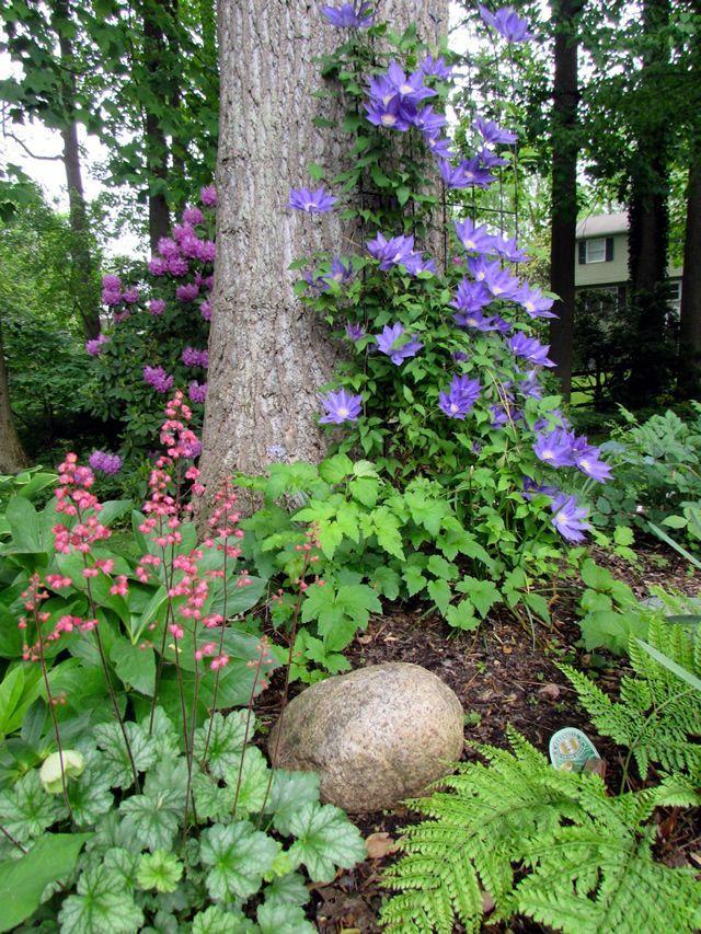 The Multi-Faceted Gardener - FineGardening