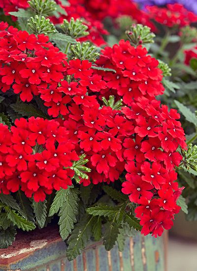 Plants with red flowers & foliage