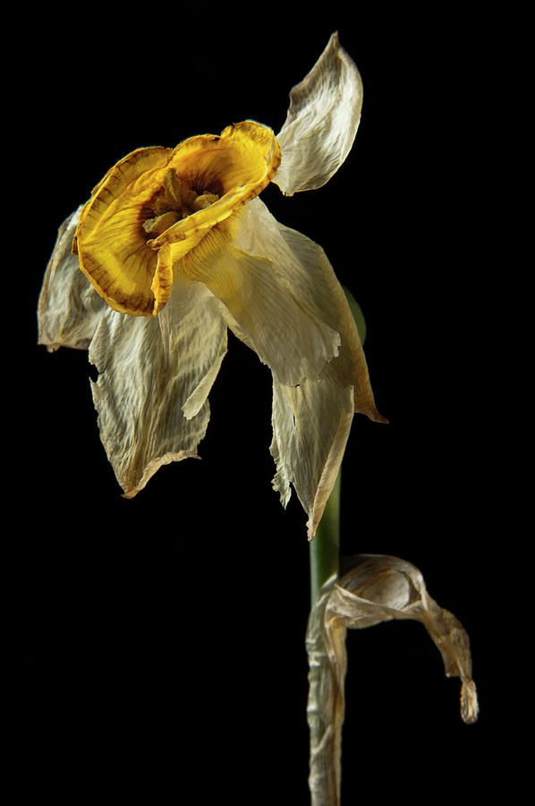 Dead Flower 178 by Thom Gourley
