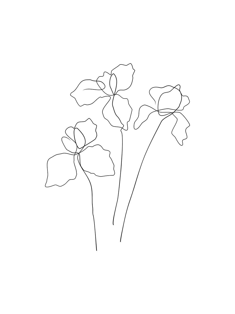Iris Flower - Poster