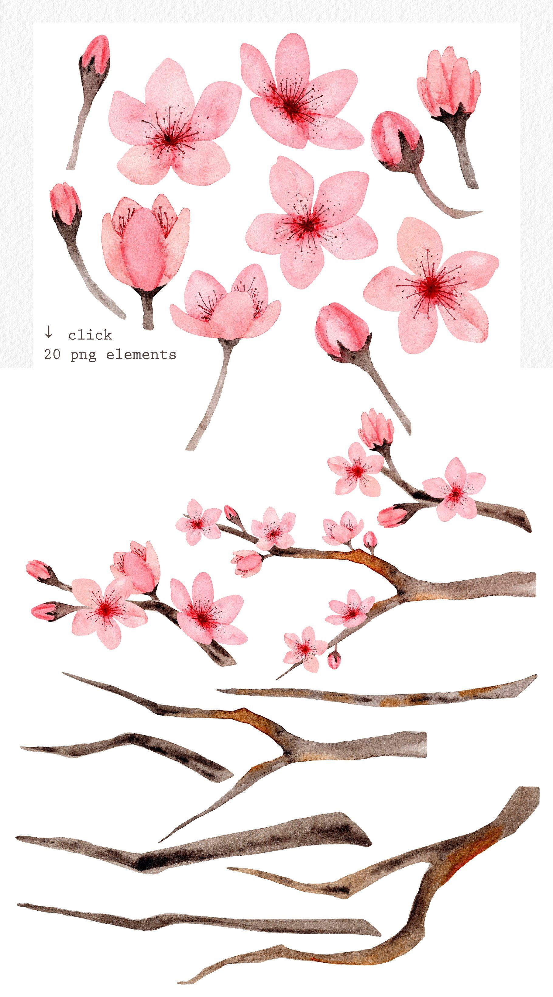 Watercolor Cherry Blossom. Patterns