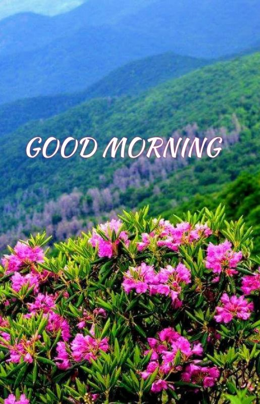 Beautiful Good Morning Picture - DesiComments.com