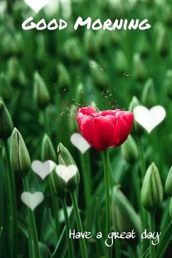 Flower Good Morning Photo | Good Morning Flower | Natural Good Morning