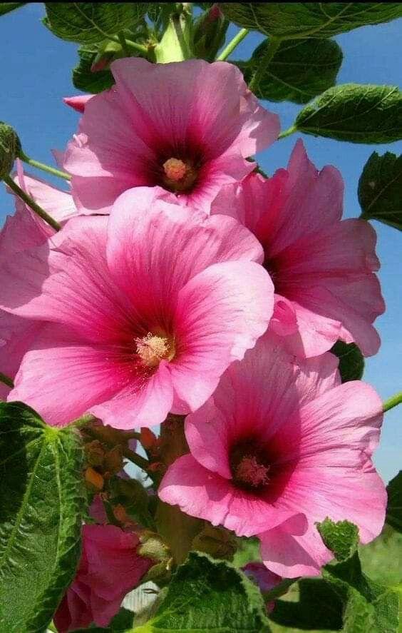 Typea of Pink flowers dark