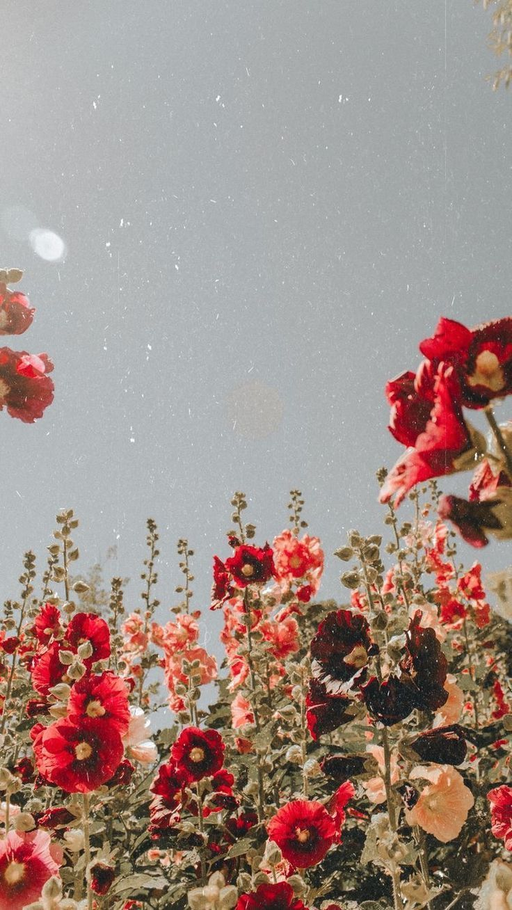 red flowers #love