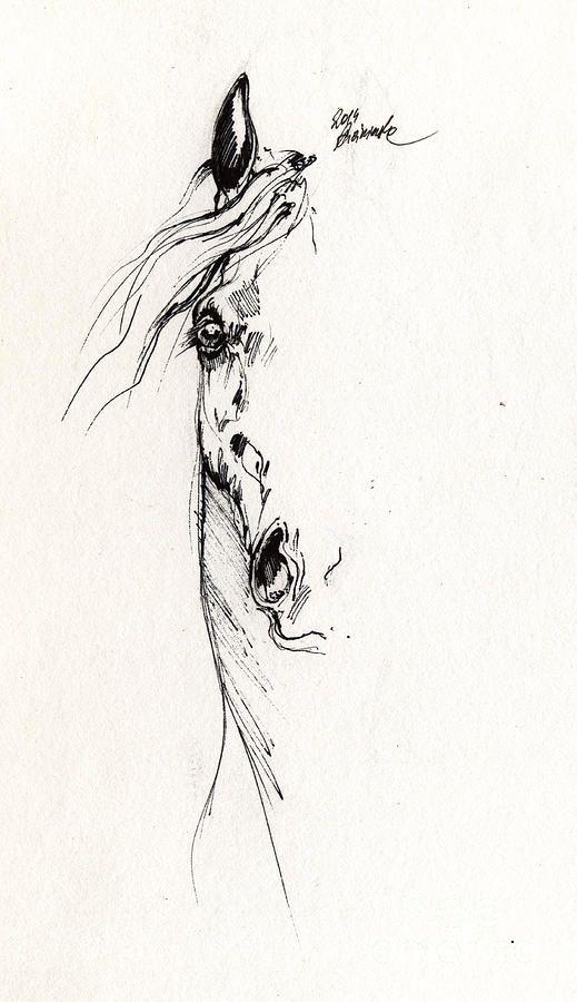 Horse head study 2014 05 16 by Angel Ciesniarska