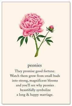 A Perfect Wedding Flower~the Peony