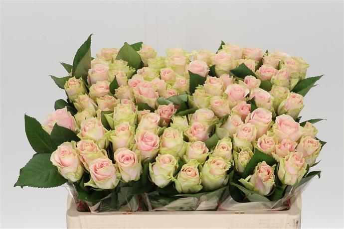 - Heemskerk Flowers