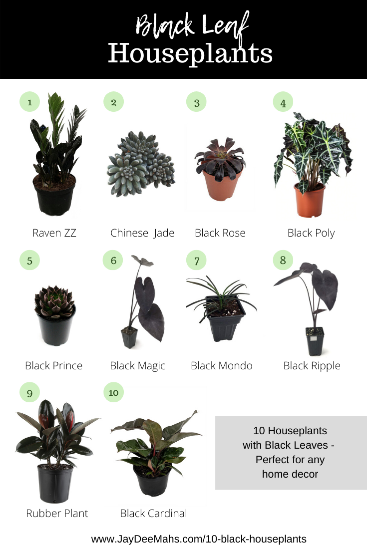 10 Black Houseplants Perfect For Any Home Decor