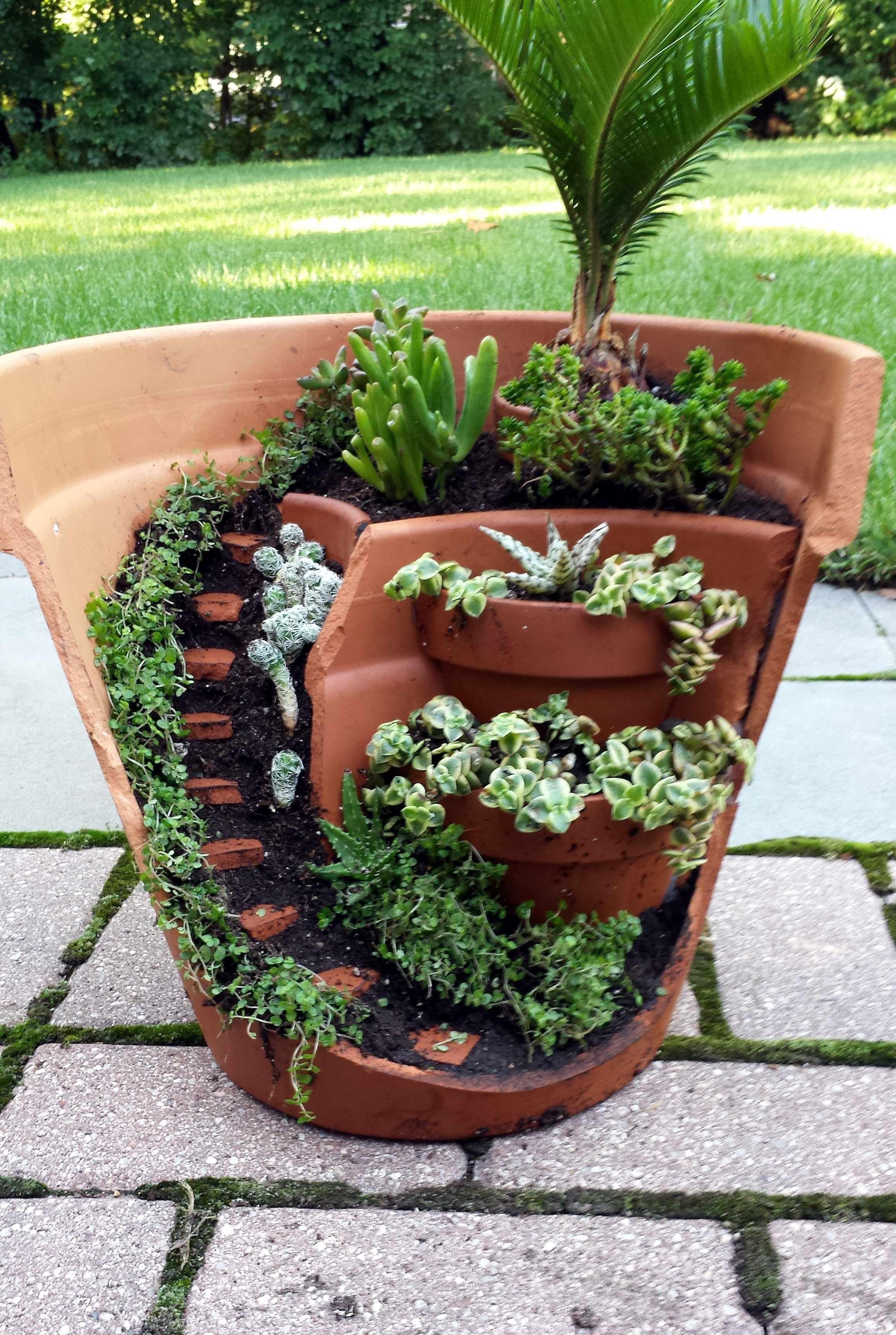 Idée décoration plantes succulentes (plantes grasses)