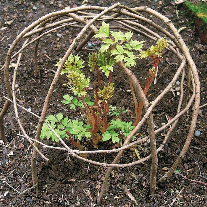 Instant protection for perennials