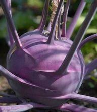 North Florida Vegetable Planting Guide