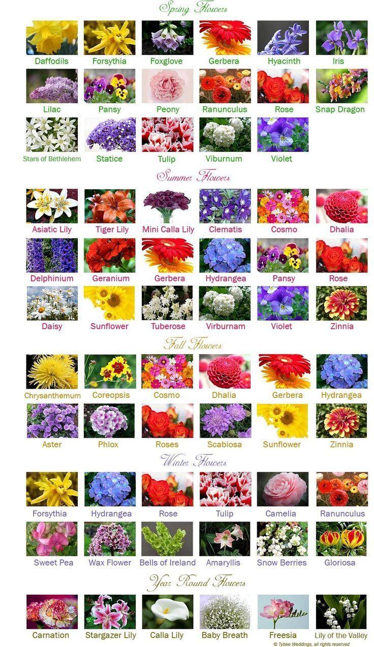 Hochzeitsblumen bis zum Monat  #hochzeitsblumen #monat ,  #bis #Hochzeitsblumen #Monat #zum