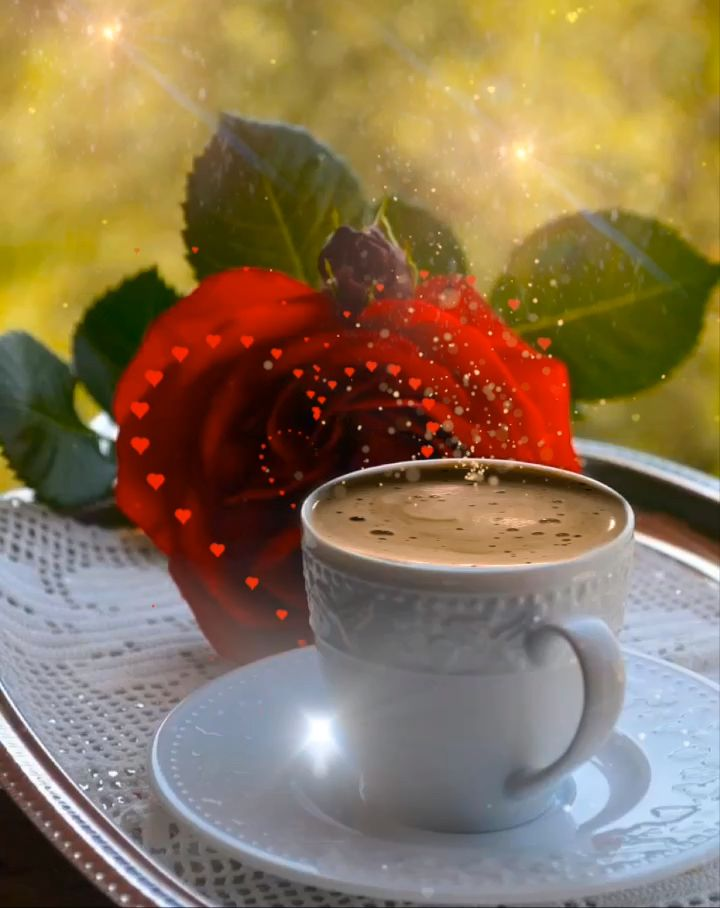 Good morning, hopefully something to brighten your day ☕️ 🌹