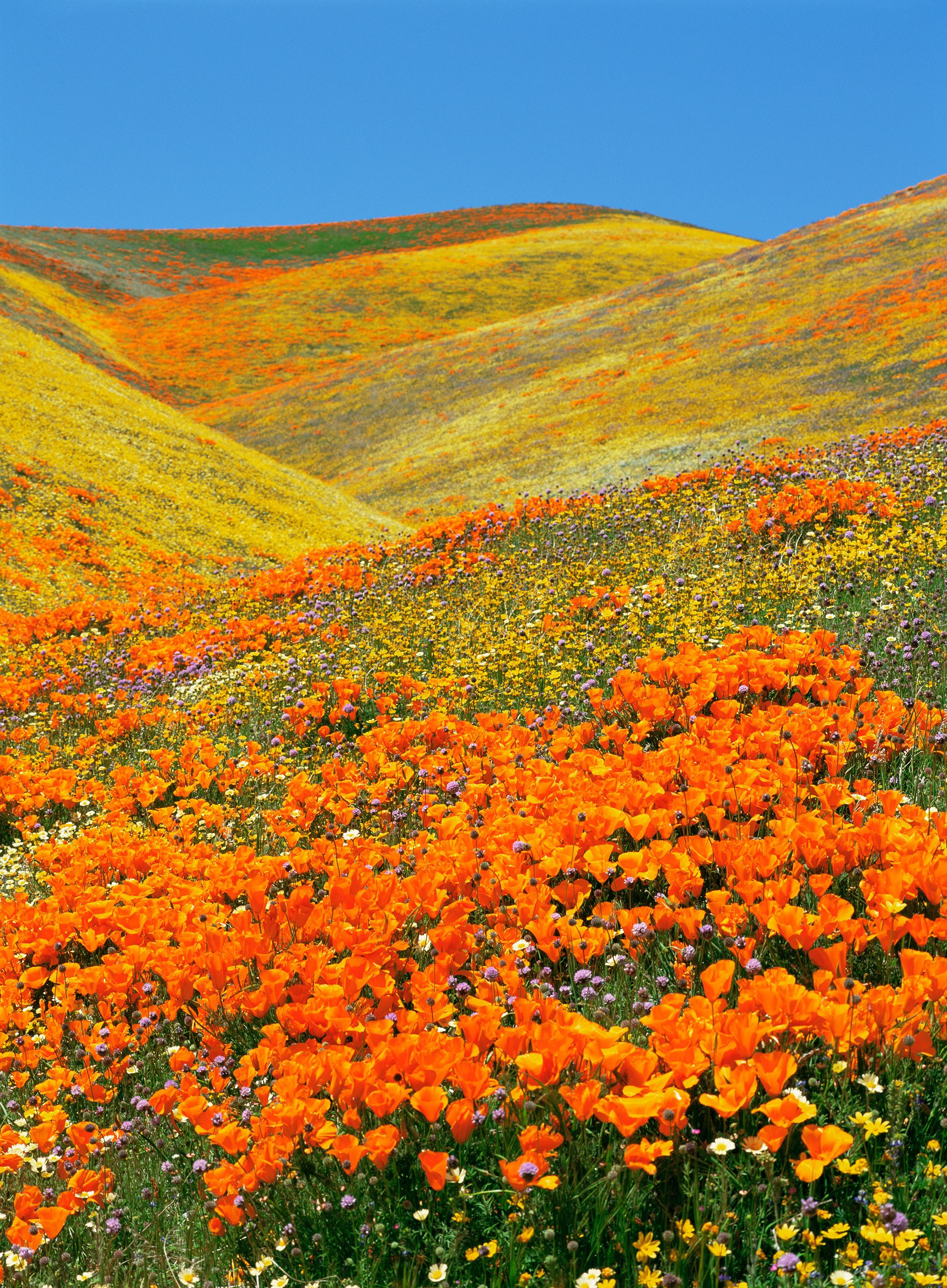 10 Destinations to Visit to See Gorgeous Spring Flowers