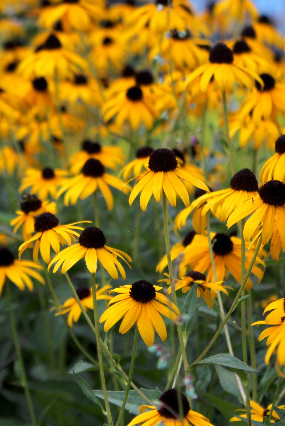 10 Perennials That'll Add Tons of Color to Your Garden